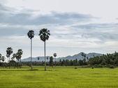 Campo verde e céu cinzento — Fotografia Stock