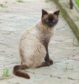 Cat on the sidewalk — Stock Photo