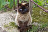 Gato no jardim — Fotografia Stock