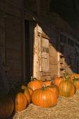 Fall Harvest — Stock Photo