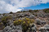Kilimanjaro de encostas mais baixas — Foto Stock