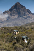 Porters passing through moorland on Kilimanjaro — Stock Photo