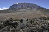 Mirando hacia atrás kilimanjaro desde la ruta marangu — Photo