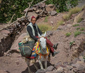 Berber Shepherd on donkey — Stock Photo