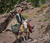 Berber Shepherd on donkey — Stock Photo