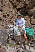 Trekker on a donkey — Stock Photo