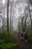 Trekking through Rain Foreest on Kilimanjaro — Stock Photo