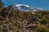 Porter descending Kilimanjaro — Stock Photo