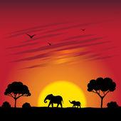 Sonnenuntergang auf einer savanne — Stockvektor