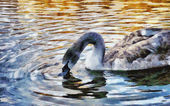 Lonely swan swimming — Stock Photo