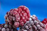 The frozen blackberry close up — Stock Photo