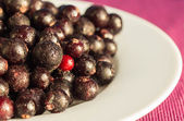 The frozen berries of black currant on a white plate — Stock Photo