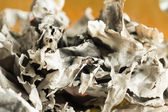 The burned-down paper pages close up — Photo