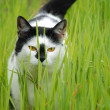 Cat in the grass — Stockfoto