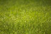 Gras — Stock Photo