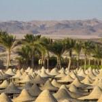 Постер, плакат: Desert in egypt in marsa alam