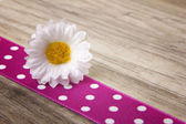 Decoration for spring and easter — Stock Photo