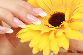 A female hand touching a flower — Stock Photo