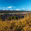 Mt. McKinley (Denali) with yellow bush in autumn — Stock Photo