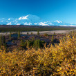 Mt. McKinley (Denali) with yellow bush in autumn — Stock Photo