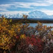 Mt. McKinley taken from Reflection pond with colourful bush — Stok fotoğraf