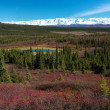 Tundra landscape in Denali National Park near Wonder Lake campsite — Stockfoto