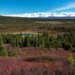 Tundra landscape in Denali National Park near Wonder Lake campsite — ストック写真