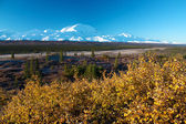 Mt. McKinley (Denali) with yellow bush in autumn — Stok fotoğraf