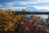Mt. McKinley taken from Reflection pond with colourful bush — Stock Photo