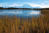 Mt. McKinley taken from Reflection pond with yellow grass — Stok fotoğraf