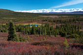 Tundra landscape in Denali National Park near Wonder Lake campsite — Foto Stock