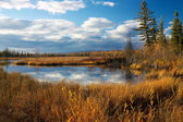 Autumn lake near Fairbanks — Foto de Stock