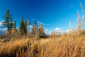 Autumn lake near Fairbanks — Foto Stock