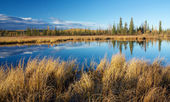 Autumn lake near Fairbanks — Stockfoto