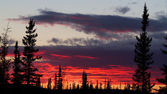 Red sunset behind forest — Foto de Stock