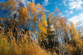 Colorful leaves on trees — Stock fotografie