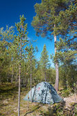 Tent pitched in forest next to pine tree during sunny day — Foto de Stock