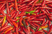 A lot of red chillies and green chilies — Stock Photo