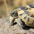 Turtle — Stock Photo #35137093