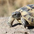 Turtle — Stock Photo #35137145