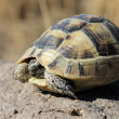 Turtle — Stock Photo #35141727