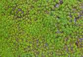 Zelený mech na skále — Stock fotografie