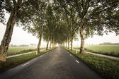 Tree tunnel roads — Stock Photo