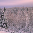 Stock Photo: Forest In Winter