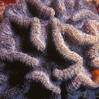 Stock Photo: Coral Formation