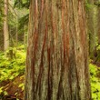 Stock Photo: Tree Trunk In Forest