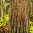 Tree Trunk In The Forest — Stock Photo