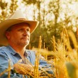 Cowboy In Wheat Field — Stok fotoğraf