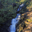 Waterfall In Forest — Stock Photo #31603431