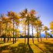 Trees In Autumn — Stockfoto #31603435